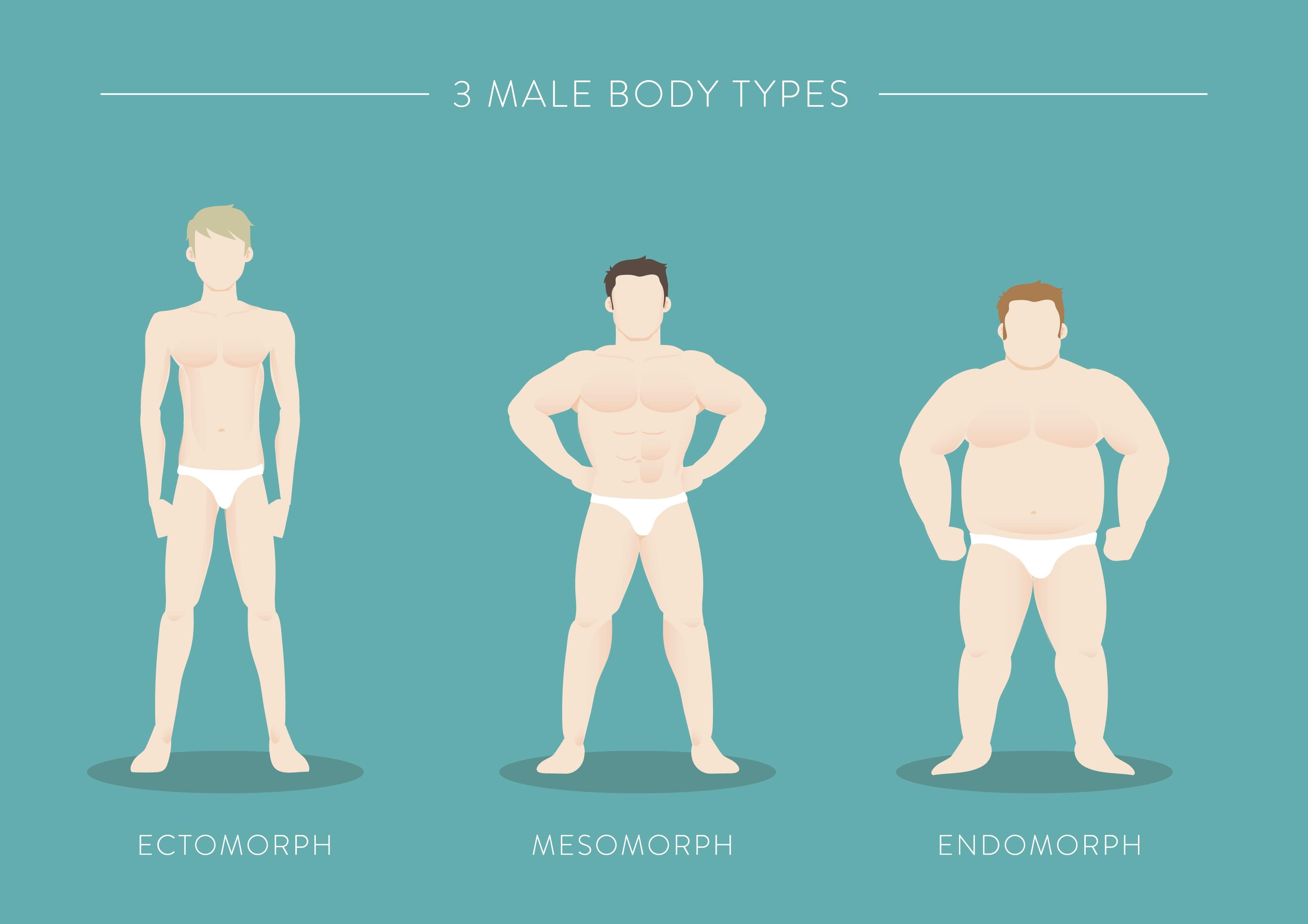 male body types ectomorph mesomorph endomorph